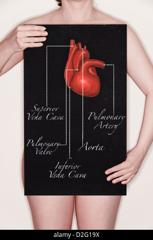 Woman holding a blackboard with a title diagram / illustration of a human body heart drawn on it in chalk - Stock Image