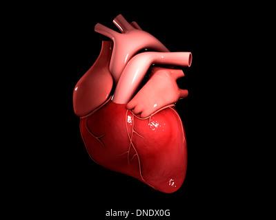 Conceptual image of human heart. - Stock Image