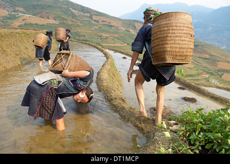 Young girl from Black Hmong ethnic group working on the rice fields, Sapa area, Vietnam, Indochina, Southeast Asia, Asia - Stock Image