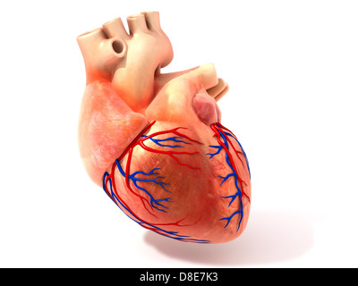 Illustration of a heart - Stock Image