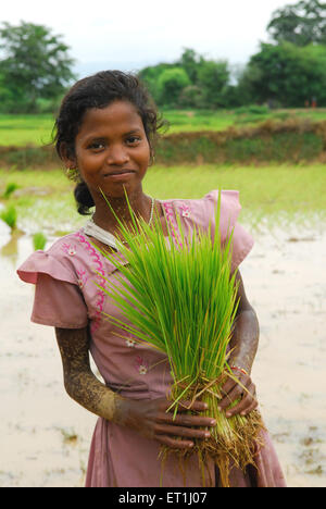 Ho tribes young girl holding rice crop ; Chakradharpur ; Jharkhand ; India NO MR - Stock Image