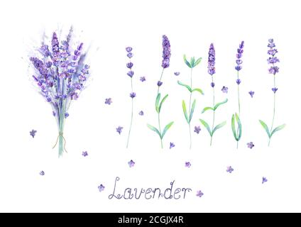 Lavender flowers, bouquet, lettering purple green watercolor set isolated on white background. Watercolour hand drawn botanical illustration. For invi - Stock Vector
