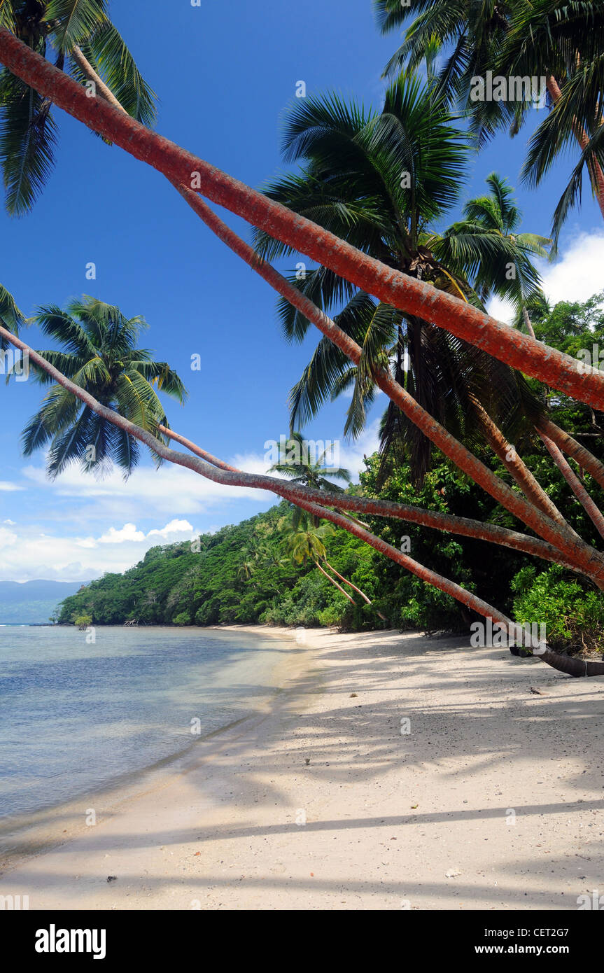 Beach and coconut palms at Dolphin Bay Divers Resort, Vanua Levu, Fiji Stock Photo