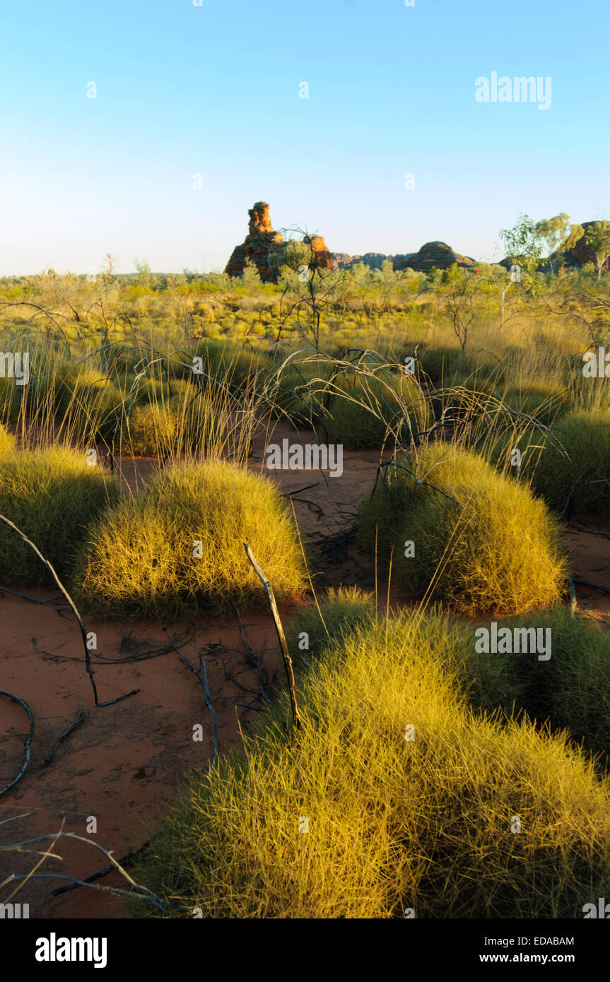 bunch-grass-triodia-the-bungle-bungles-p