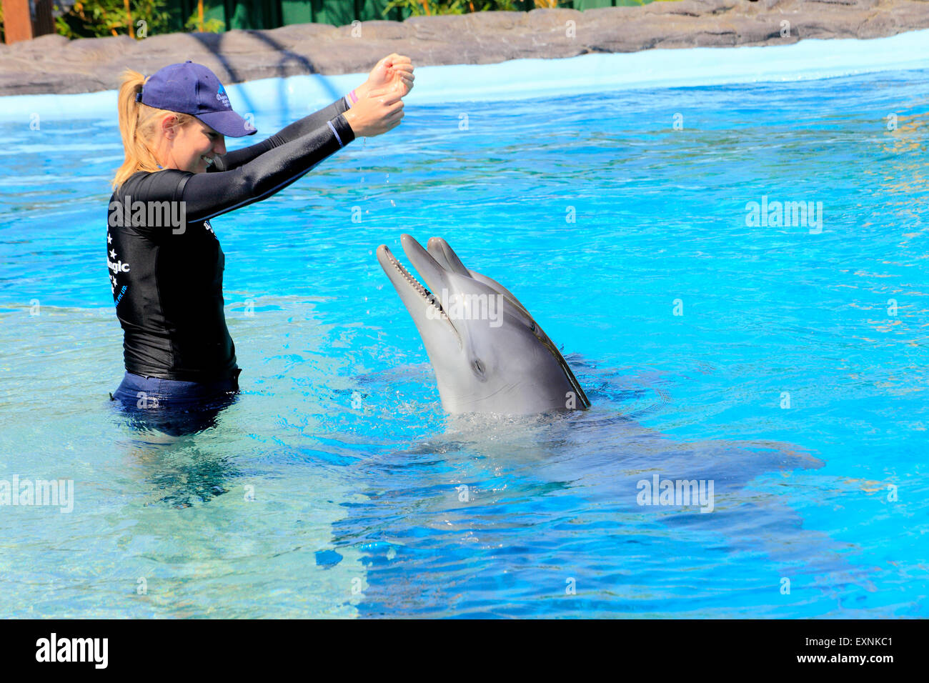 dolphin-trainer-interacts-with-two-indo-pacific-bottlenose-dolphinstursiops-EXNKC1.jpg