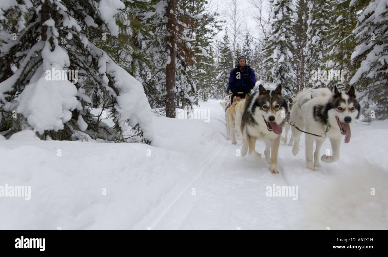 husky-sledding-luosto-lapland-northern-f