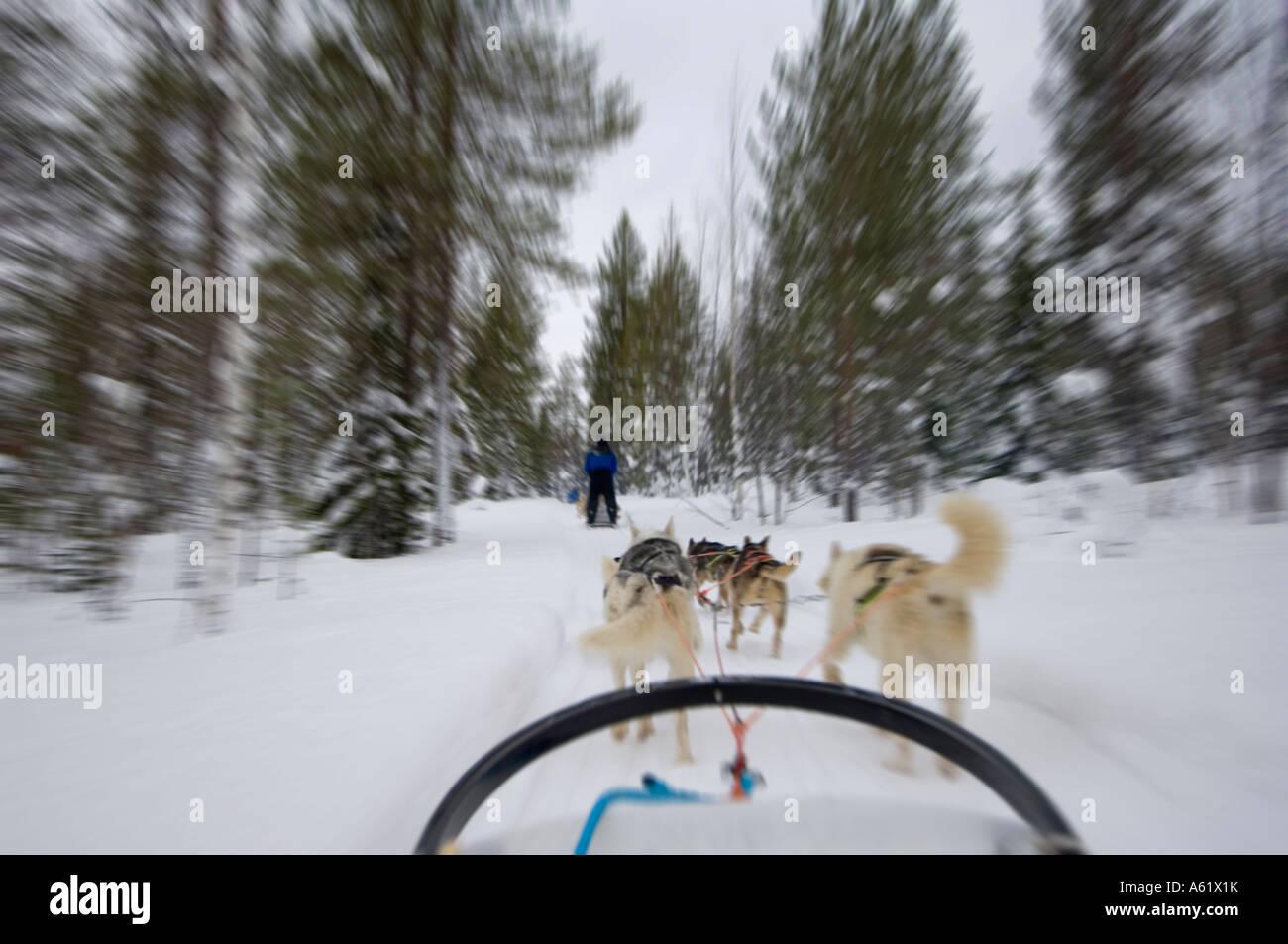 husky-sledding-speeding-through-the-fore