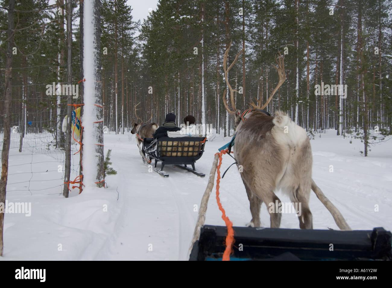 reindeer-farm-luosto-lapland-northern-fi