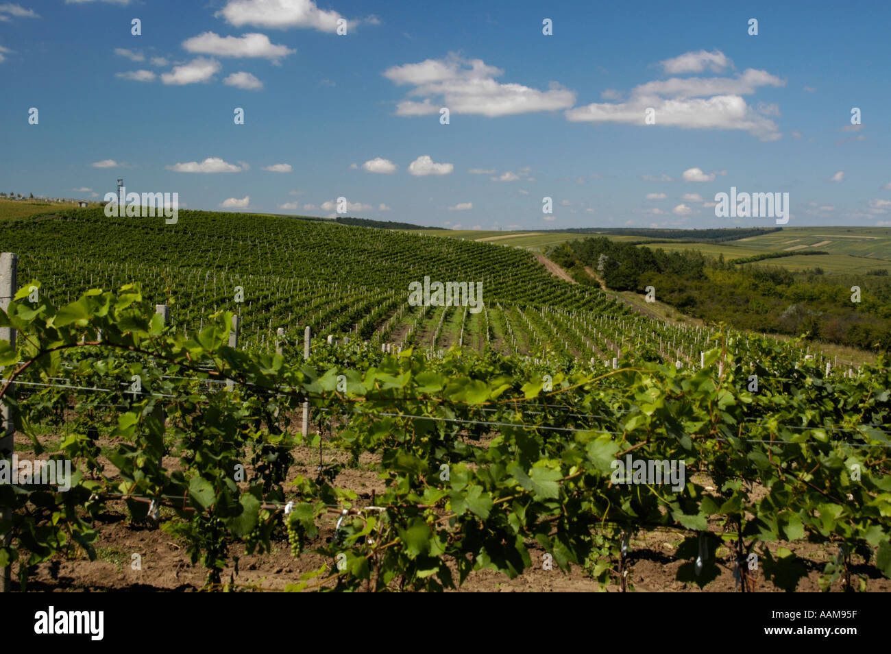 moldova-famous-vinery-of-cricova-vineyar