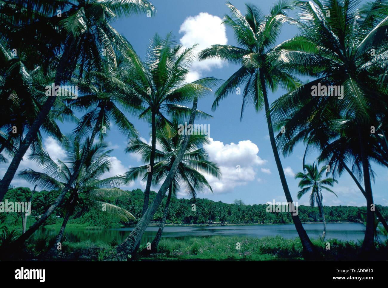 sun-sea-and-palm-trees-at-nauru-lagoon-s