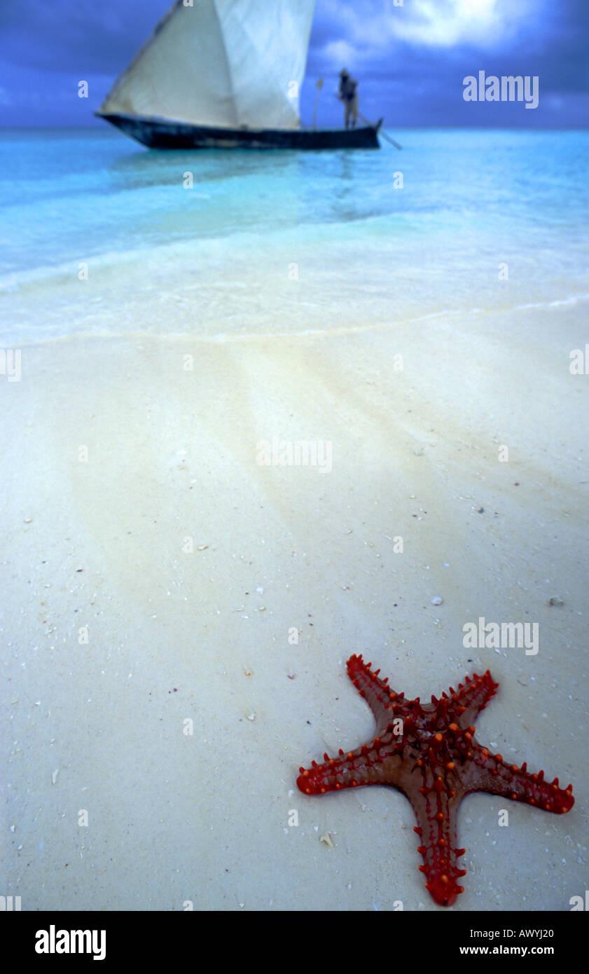 Starfish and passing dhow, Kendwa, Zanzibar Stock Photo