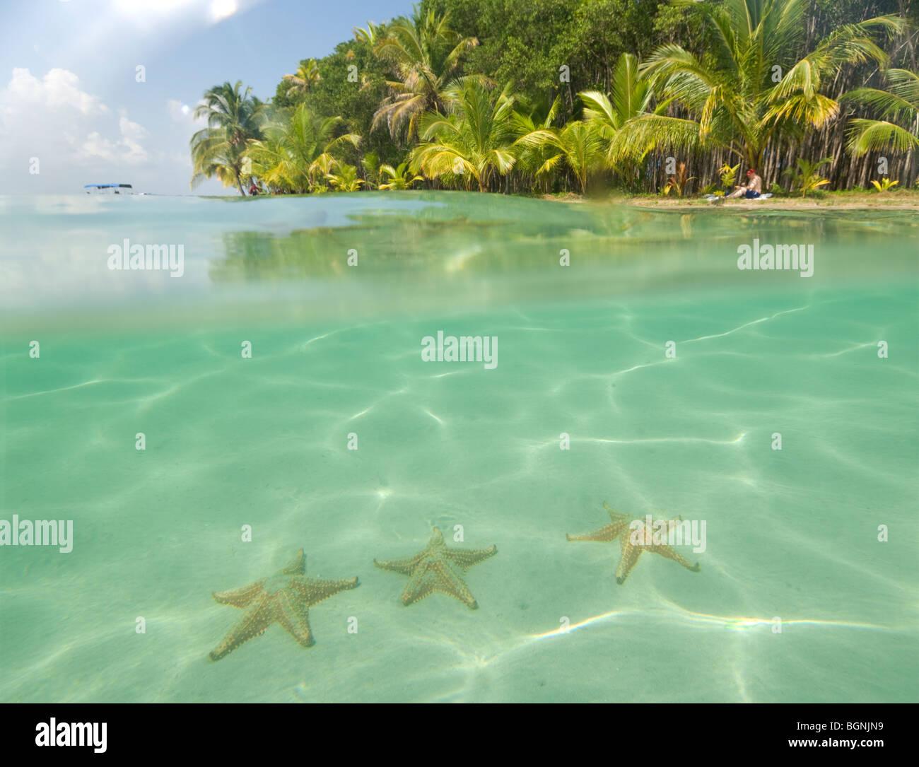 panama-boca-del-drago-starfish-beach-boc