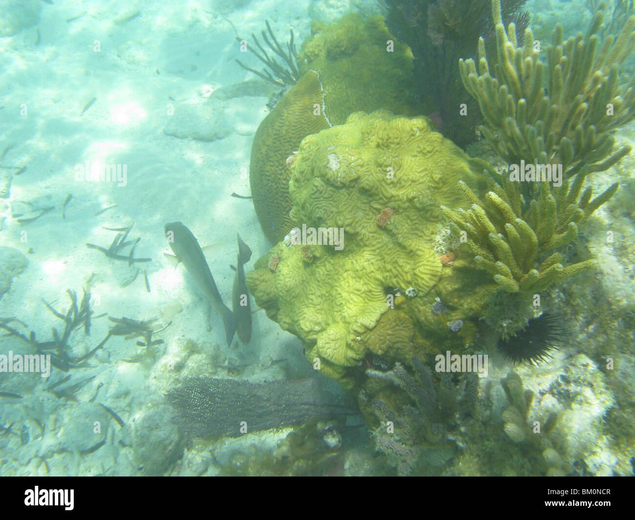 underwater-near-fort-jefferson-fl-gulf-o