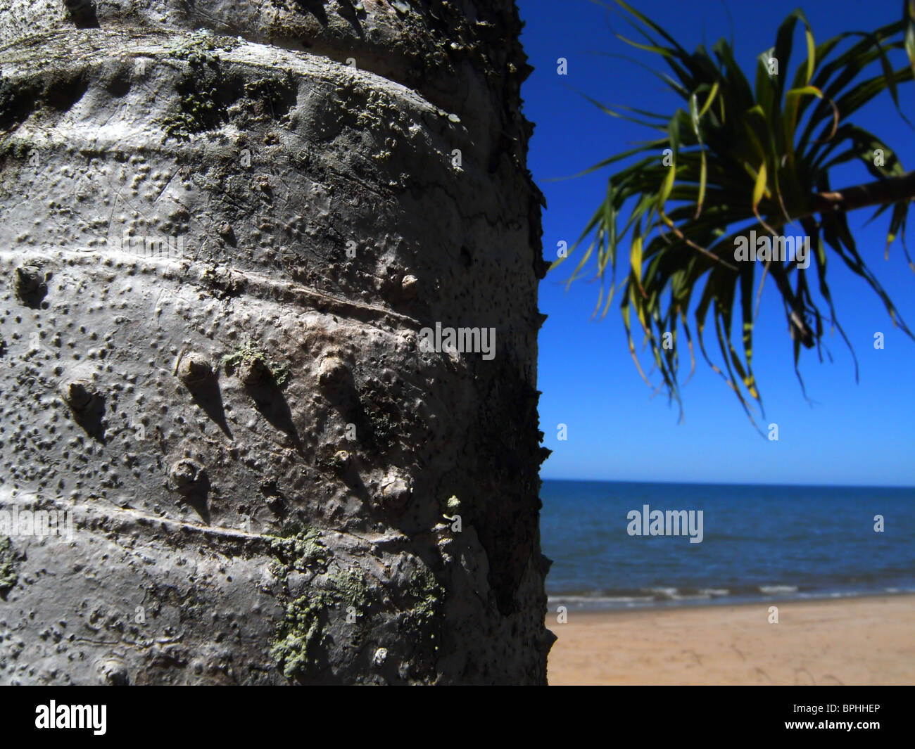 pandanus-palm-on-beach-ella-bay-national