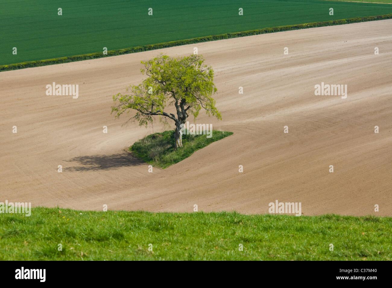 lone-tree-meon-valley-hampshire-uk-C37M4