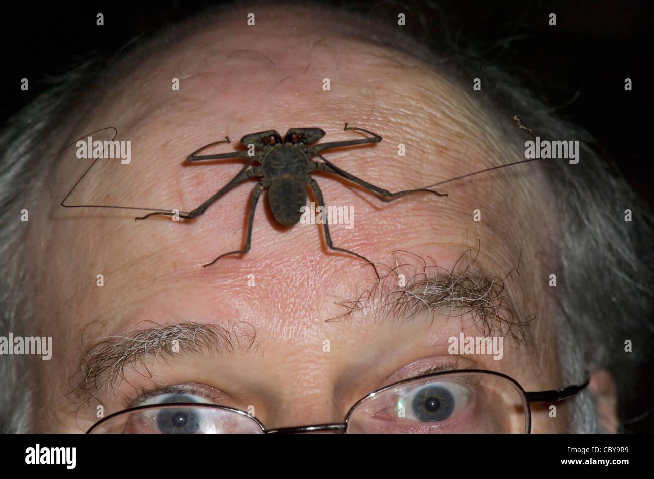 tailless-whipscorpion-paraphrynus-laevif