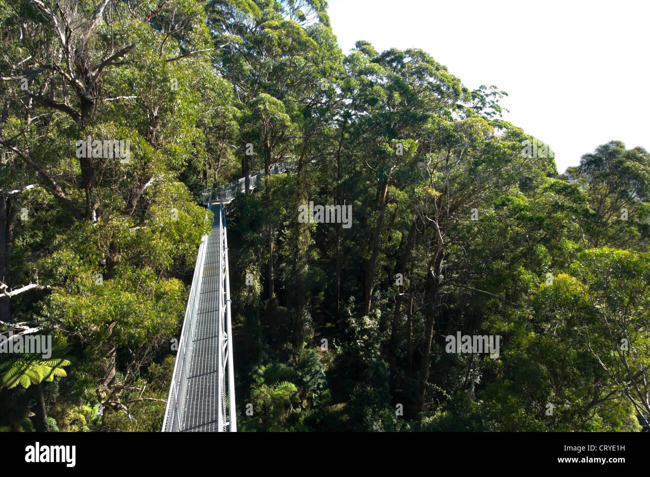 illawarra-fly-tree-top-walk-near-wollong