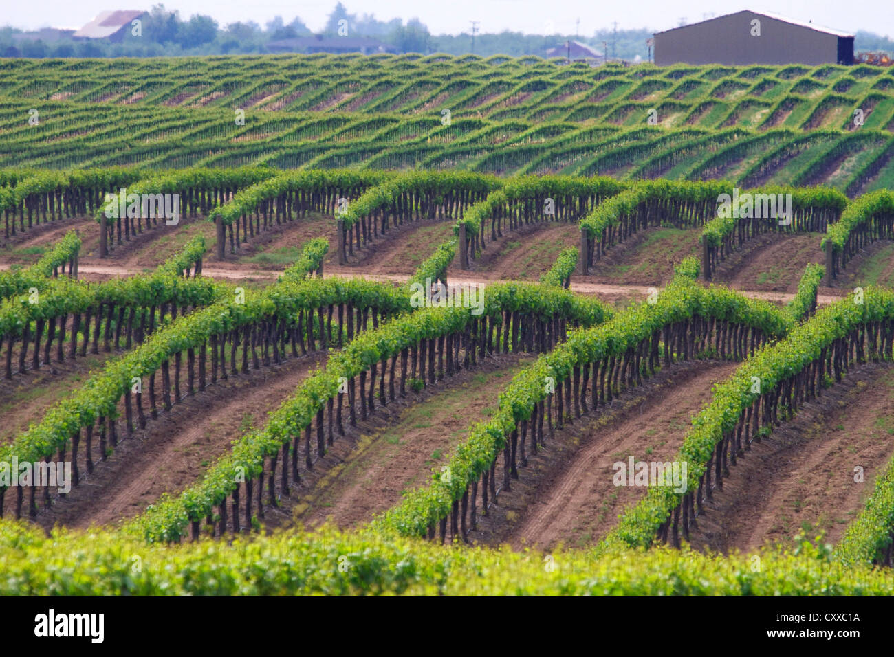 vineyards-owned-by-ernest-and-julio-gall