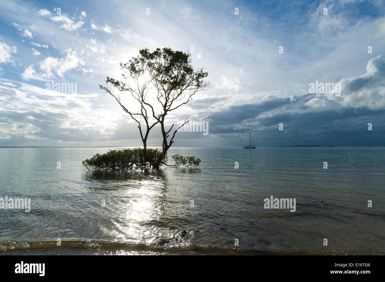 grey-mangrove-at-sunset-fraser-island-qu