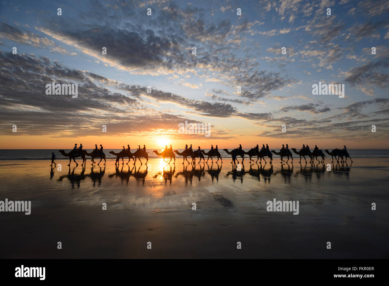 tourist-camel-train-on-cable-beach-at-su