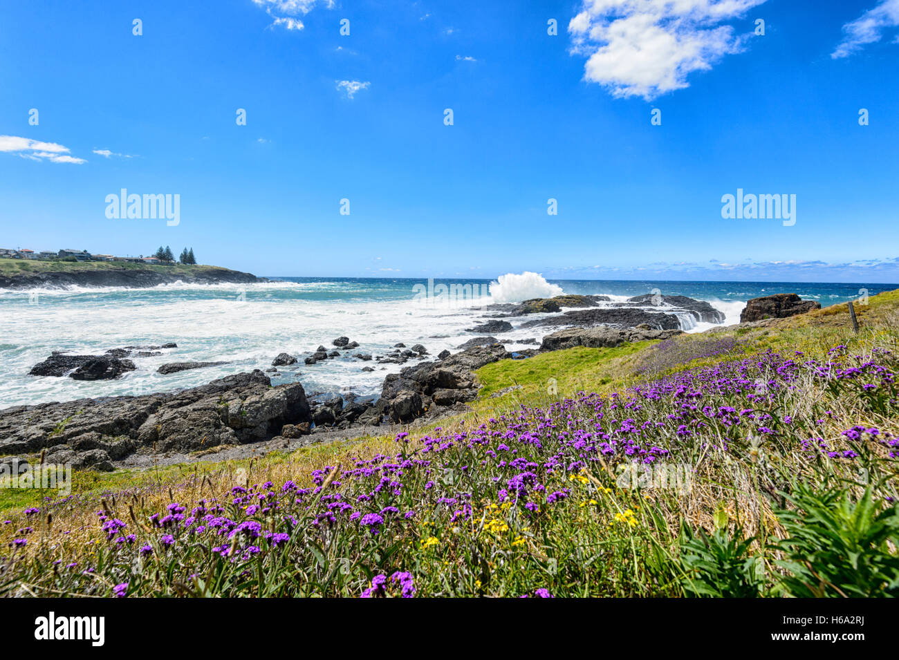 scenery-along-the-coast-path-in-spring-a