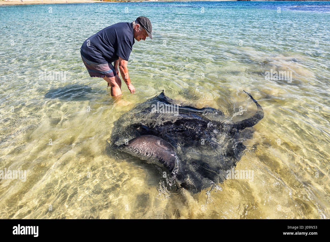 male-feeding-a-giant-stingray-at-washerw