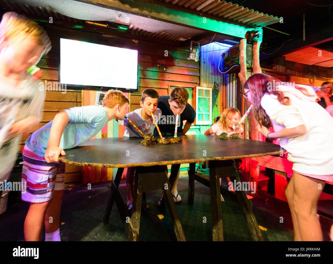 cane-toad-racing-evening-at-the-iron-bar