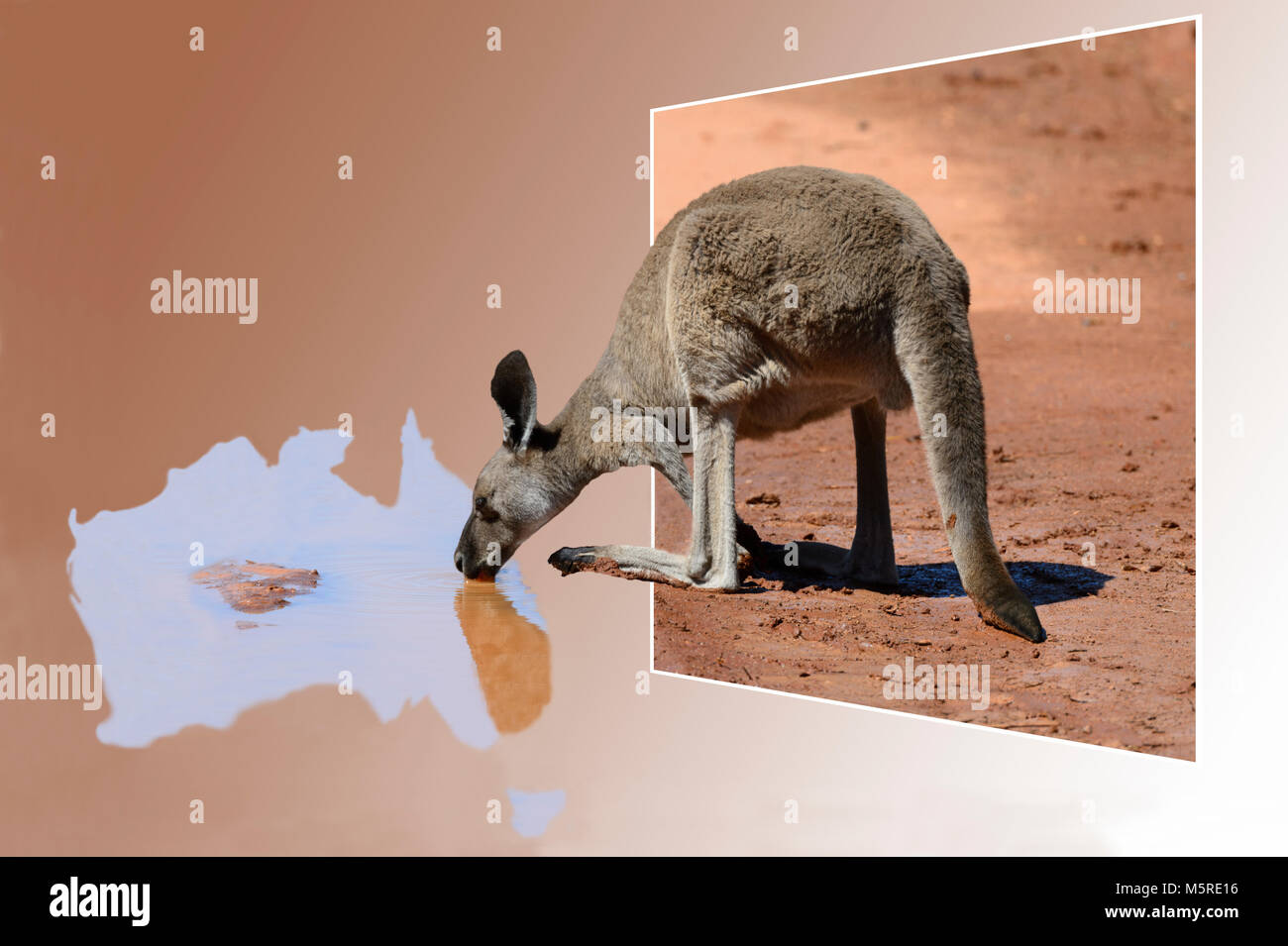 out-of-frame-kangaroo-drinking-from-a-pu