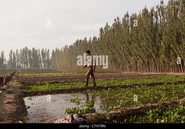an-uighur-man-irrigates-and-tends-to-his