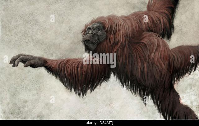 dryopithecus=hispanopithecus-laietanus-a