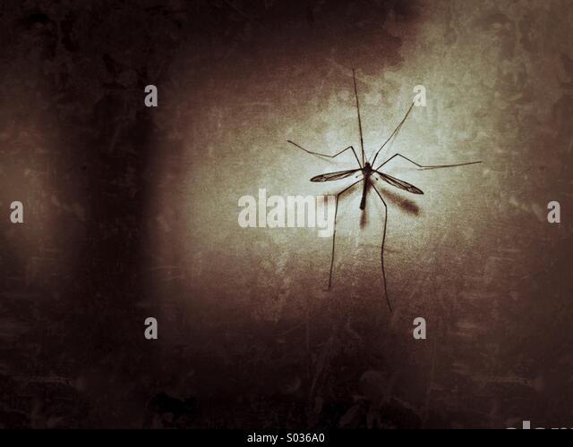 Mosquito Stock Photos & Mosquito Stock Images - Alamy - 웹