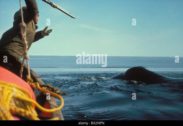 alaska-balaena-mysticetus-bering-sea-bow