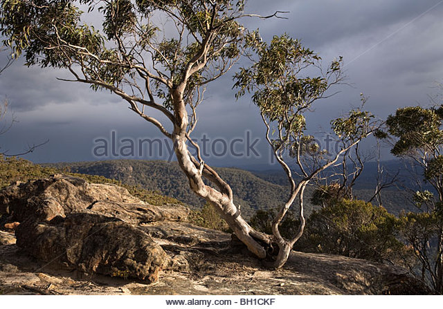 Lonely Gum Tree framing the view from Echo Point Lookout, Bundanoon, Morton National Park, New South Wales, Australia - Stock Image