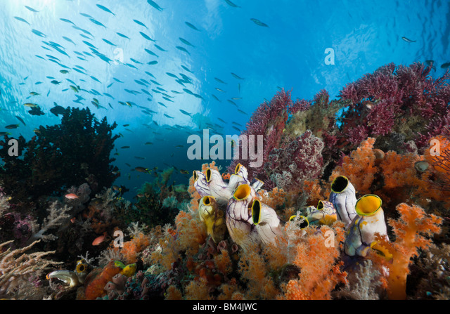 healthy-coral-reef-raja-ampat-west-papua