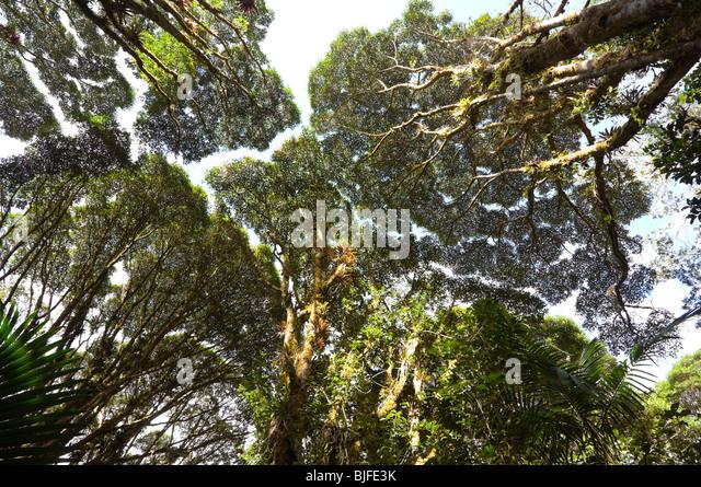 canopy-crown-shyness-parque-nacional-la-