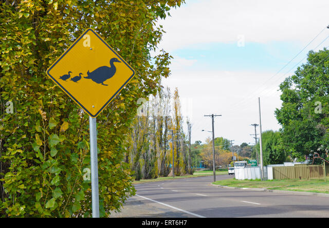 Ducks Crossing road sign adjacent to the Peel River Tamworth Australia - Stock Image
