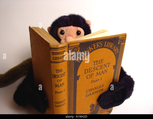 Toy monkey reading The Descent of Man by Charles Darwin Thinkers Library - Stock Image