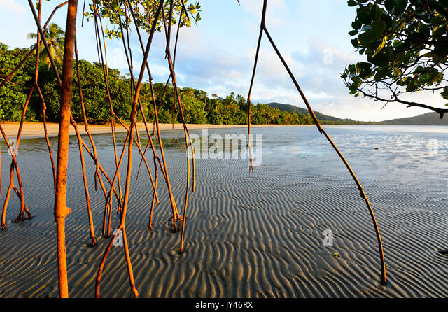 aerial-roots-of-a-mangrove-tree-at-sunri