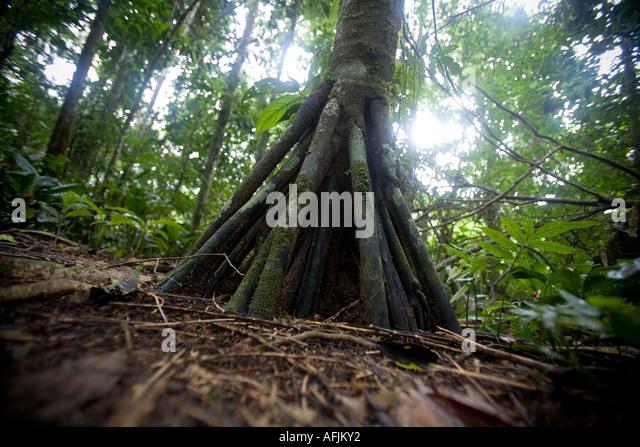 walking-palm-afjky2.jpg