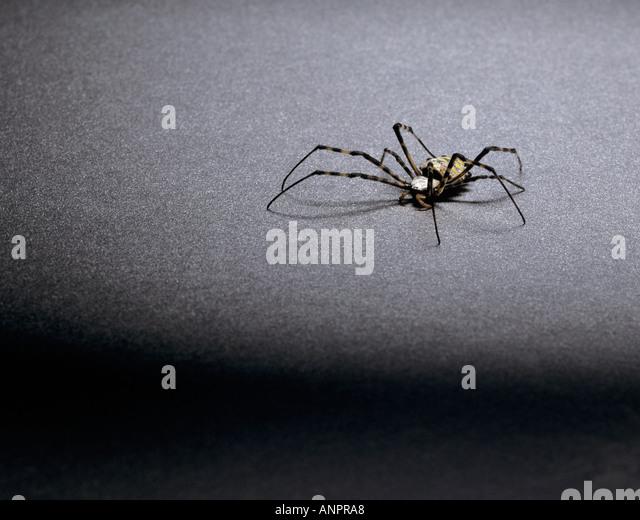 an-orb-spider-anpra8.jpg
